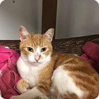 Adopt A Pet :: Juju - Diamond Springs, CA
