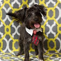 Adopt A Pet :: Blake - Troy, MI