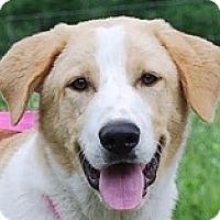 Adopt A Pet :: Butler - Baltimore, MD