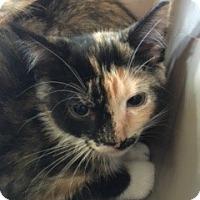 Adopt A Pet :: Spot - McHenry, IL