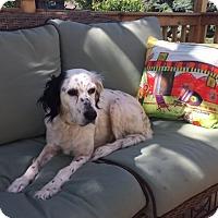 Adopt A Pet :: ROSE - Pine Grove, PA