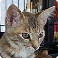 Adopt A Pet :: Katrina - Winchester, CA