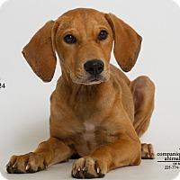 Adopt A Pet :: Lu lu - Baton Rouge, LA