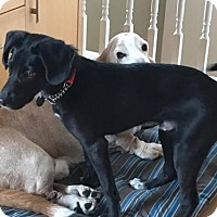 Adopt A Pet :: Dylan - Denver, CO