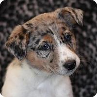 Adopt A Pet :: Nokie - Dodson, MT