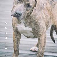 Adopt A Pet :: Maggie - Webster, TX