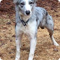 Adopt A Pet :: Kasper - Richmond, VA