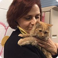 Adopt A Pet :: Carma - Manchester, CT