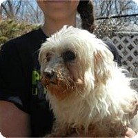 Adopt A Pet :: Angel - TINY!! - Antioch, IL