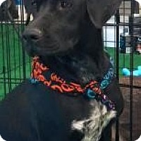 Adopt A Pet :: Diamond - Phoenix, AZ