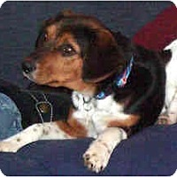 Adopt A Pet :: Imogene - Novi, MI