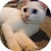 Adopt A Pet :: Macchiato - Vancouver, BC