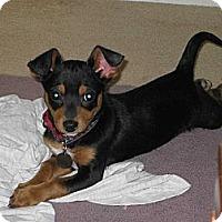 Adopt A Pet :: Winnie - Santa Monica, CA