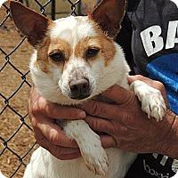 Adopt A Pet :: Parker - Houston, TX