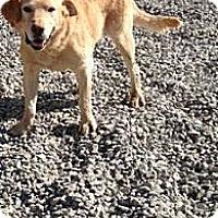 Adopt A Pet :: Denver - Orange Cove, CA