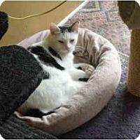 Adopt A Pet :: Junior Mint - Delmont, PA