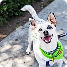 Adopt A Pet :: Chase