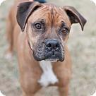 Adopt A Pet :: Jasper (Has Application)