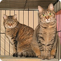 Adopt A Pet :: Teena and Thea - Milford, MA