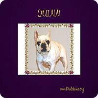 Adopt A Pet :: Quinn - Alabaster, AL