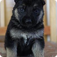 Adopt A Pet :: GENERAL - Winnipeg, MB