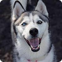 Adopt A Pet :: Kaya - Jupiter, FL