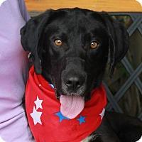 Adopt A Pet :: Jack - Garfield Heights, OH