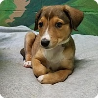 Adopt A Pet :: Bette - Chantilly, VA