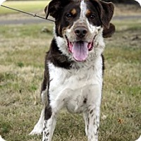 Adopt A Pet :: Archie - ADOPTION PENDING - Woodburn, OR