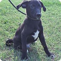 Adopt A Pet :: Earnie ~ ADOPTED! - Brattleboro, VT