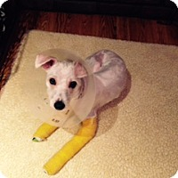 Adopt A Pet :: Camo - N. Babylon, NY