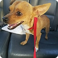 Adopt A Pet :: Slim - Las Vegas, NV