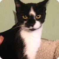 Adopt A Pet :: Vinny - Bridgeton, MO