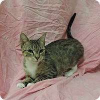 Adopt A Pet :: ATHENA - Sioux City, IA