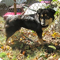 Adopt A Pet :: Cherie - West Warwick, RI