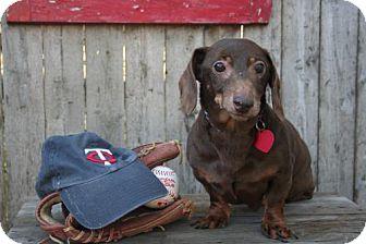 Dachshund Dog for adoption in Sioux Falls, South Dakota - Bandit