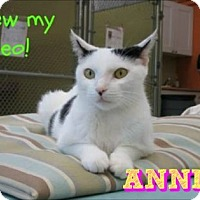 Adopt A Pet :: Annie - Sarasota, FL