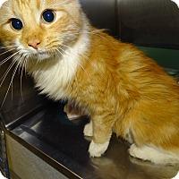 Adopt A Pet :: SHERBERT - Brooksville, FL