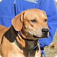 Adopt A Pet :: Lady - Berkeley Heights, NJ