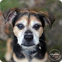 Adopt A Pet :: Sparky - Lyons, NY