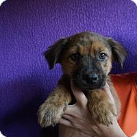 Adopt A Pet :: Diddley - Oviedo, FL