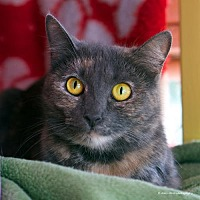 Adopt A Pet :: Dido - Tucson, AZ