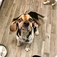 Adopt A Pet :: Brady IV - Tampa, FL