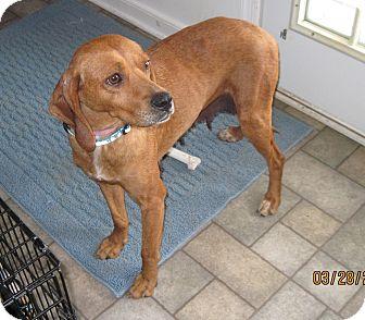 Hound (Unknown Type)/Labrador Retriever Mix Dog for adoption in Richmond, Virginia - Dora