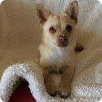Adopt A Pet :: Starkist - Tustin, CA