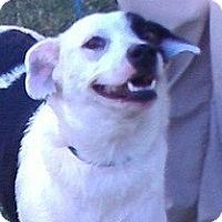 Adopt A Pet :: Constance - Justin, TX