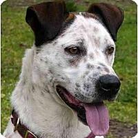 Adopt A Pet :: Hurley - Mocksville, NC