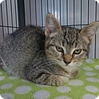 Adopt A Pet :: Mark 2 - Shelton, WA