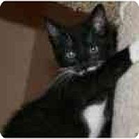 Adopt A Pet :: Barnaby - Arlington, VA