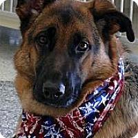 Adopt A Pet :: Sunshine needs love - Sacramento, CA